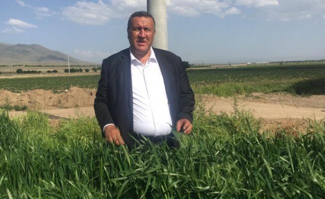 Buğday ekim alanları daralıyor