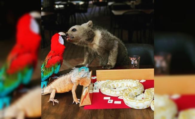 Böyle dostluk görülmedi: Hayvanların iletişimi insanlara örnek oluyor