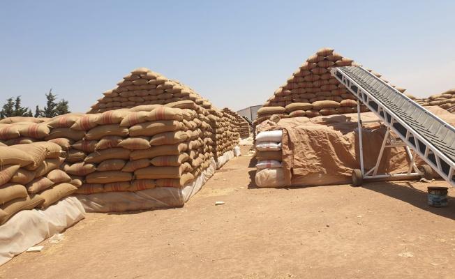 Türk tohumu Orta Doğu'da yeşeriyor