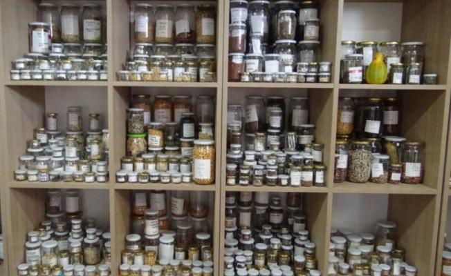 Bursa Tohum Kütüphanesi'nde 500 çeşit yerli tohum bulunuyor