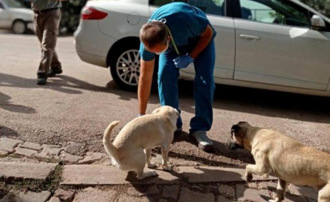 Bursa'da sahipsiz köpekler parazitlere karşı ilaçlandı