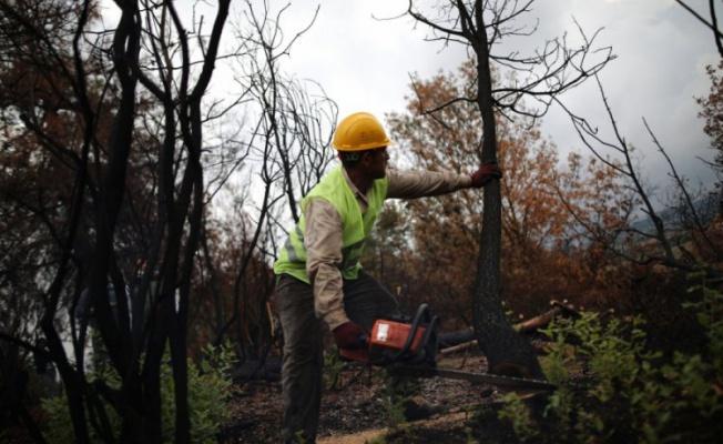 Bursa'da yanan ormanlar temizleniyor