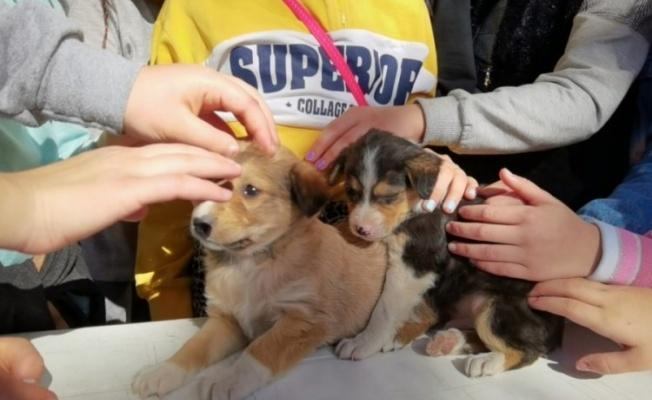 Bursa'da çocuklar, sokak hayvanları için kolları sıvadı