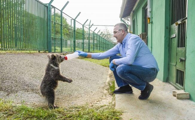 Sakarya'da ormanda bulunan yavru ayıya 'hayvan dostu'  Karacabey'den şefkat eli
