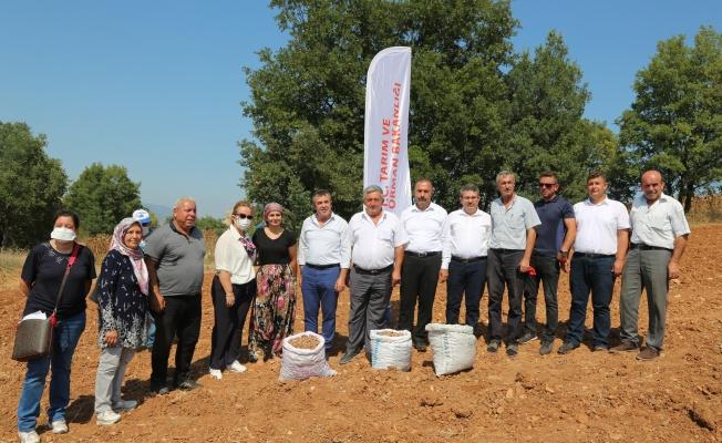 Bursa'da Safran Üretimi Yaygınlaştırılıyor
