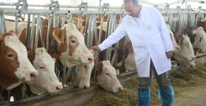 Bursa'dan Türkmenistan'a Damızlık Sığır İhracatı