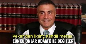 """SEDAT PEKER,""""ÇÜNKÜ ONLAR ADAM BİLE DEĞİLLER!"""