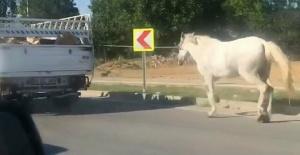Bursa'da büyük vicdansızlık