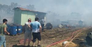 Bursa'da çiftlikte çıkan yangın ormana sıçradı