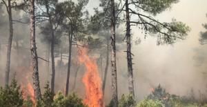 Bursa'da çıkan yangında 5 dönüm alan zarar gördü