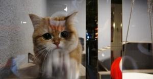 'Kedi Oteli' bayramda tamamen doldu