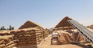 bTürk tohumu Orta Doğu#039;da yeşeriyor/b