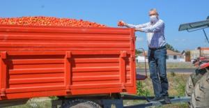 Başkan Özkan'dan domates alım fiyatları ile ilgili sert açıklama