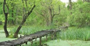 'Yeşil Karacabey' hedefiyle kentteki yeşil alan sayısı artacak