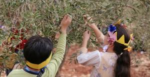 Yetim çocuklar barış  için zeytin topladı