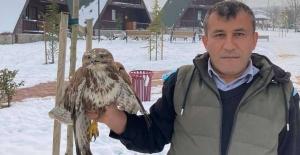 Bursa'da yaralı şahine belediye sahip çıktı