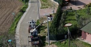 Bursa'nın leylek köyünde tüm yuvalar yenilendi