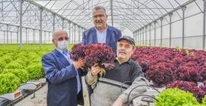 Karacabey, topraksız tarım uygulamalarıyla da rol model olacak