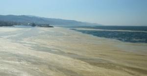 """Mudanya sahilini de ''deniz salyası"""" kapladı"""""""