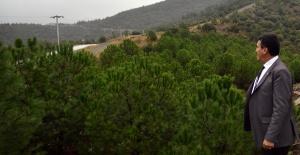 Osmangazi'de Yeşil Dönüşüm