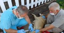 Osmangazi'de sokak hayvanları unutulmadı